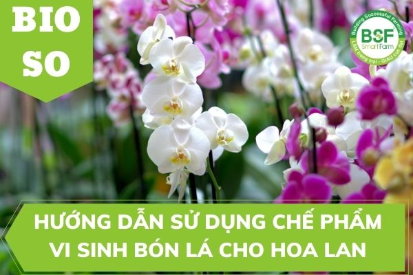 Hướng Dẫn Sử Dụng Chế phẩm vi sinh bón lá cho hoa lan BIO SO